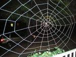 Halloween-spiderweb