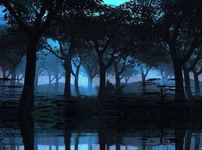 Dark Woods Moonlight