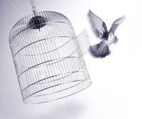 Bird_cage512232