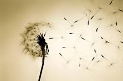 Hope dandelion