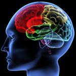 Brain colors