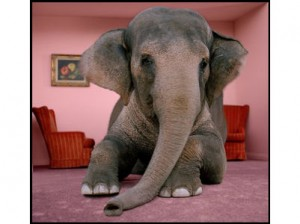 Elephant-in-the-room-net-neutrality-jpeg-300x224