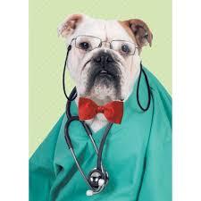 Dr bulldog