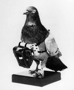 Retro carrier pigeon
