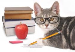 Smart-cat-e1583406861717-300x206